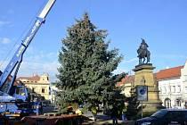 Příprava vánočního stromu v Poděbradech.