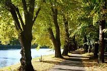 Toto stromořadí se může stát Alejí roku. Pokud získá dost hlasů.