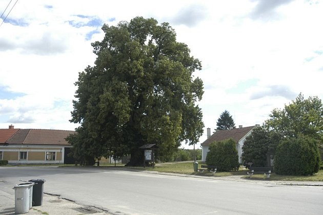 Bude Strom roku 2007 z Nymburska?
