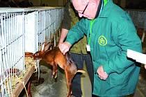 V Lysé se koná do neděle výstava Náš chovatel.