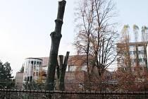 Kácení stromů u Husova sboru v Nymburce.