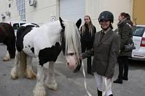 Výstava Kůň 2013 v Lysé nad Labem.
