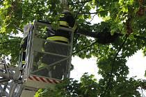 Hasiči likvidovali ve čtvrtek dopoledne roj včel v Italské ulici v Milovicích.