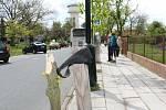 Čtyři vzrostlé stromky poničili neznámí vandalové o víkendu v Havlíčkově ulici v Nymburce.