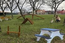 Z participativního rozpočtu kraje chtějí v Nymburce vybudovat  Dog park.
