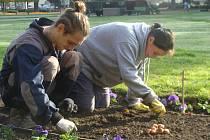 Květiny v parku a na náměstí pomáhají vysazovat studenti ze Střední školy zahradnické Kopidlno v rámci školní praxe.