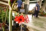 Květy 2021 na výstavišti v Lysé nad Labem.
