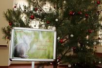 Dárky pro opuštěné kočky mohou lidé nosit pod stromeček do foyeru nymburské radnice.