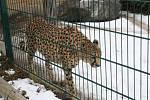 Chlebská zoo v zimě.