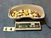 Ruzyňští celníci odhalili dvojici polykačů kokainu.