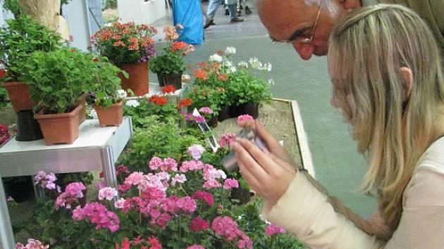Na Výstavišti v Lysé nad Labem probíhá do neděle výstava květy. Otevřeno je denně od 9 do 17 hodin.