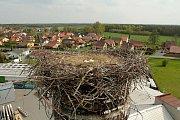 Ekologové z Huslíku se rozhodli vejce z hnízda odebrat a umístit je do inkubátoru.