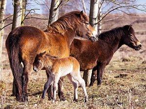 Pastvina u Milovic se zvětšila o třetinu.