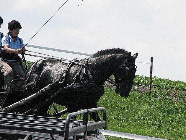 V Semicích se ovíkendu koná mistrovství republiky v koňských spřeženích.