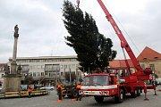 Na Nymburské náměstí dorazil v pondělí dopoledne Vánoční strom.