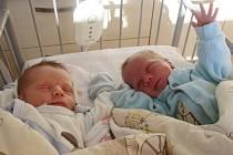 Nikolas a Sebastian Horsinkovi přišli na svět 23. září 2013. Nikolas (vlevo) v 15.42 hodin s váhou 2 900 g a mírou 49 cm, Sebastian v 15.45 hodin s váhou 1 990 g a mírou 44 cm. Doma jsou s maminkou Hanou a tátou Adamem v Milovicích.