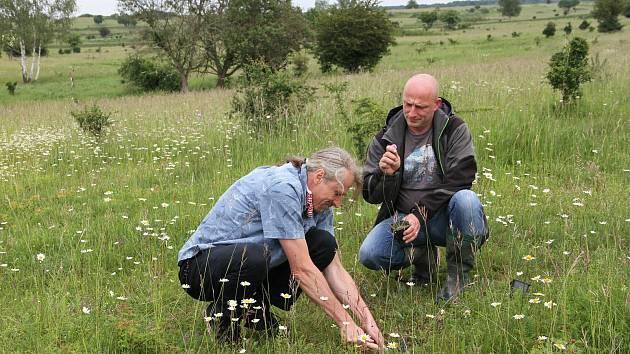V milovické rezervaci opět rostou původní druhy květin.