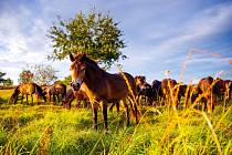 Chybí poslední podpis ze strany krajského úřadu na smlouvě a zvířata budou mít potřebný prostor pro své působení.