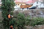 Během dopoledne zaměstnanci technických služeb zlikvidovali prohnilou vrbu z Malých Valů.