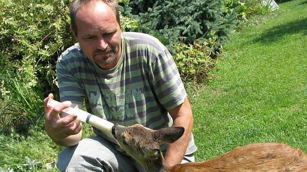 O malá srnčata se v Záchranné stanici  u Poděbrad starají každoročně.