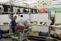 Melouny v zahradnictví u Libice mohli příchozí také ochutnat.