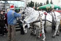 Na Výstavišti v Lysé nad Labem probíhají o víkendu Mikulášské trhy.