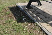 Vajglů je kolem laviček v Parku Pod hradbami jako na smetišti