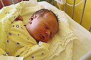 TŘI SESTRY. Viktorie Zelenková se narodila mamince Barboře a tátovi Tomášovi z Třebestovic 12. října 2017  v 0.54. Vážila 3 740 g a měřila 50 cm. Doma čekaly Dorotka (1,5 roku) a Bára (7 let).