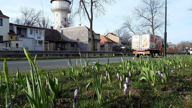 Nové květy zkrášlily Nymburk i v těžkých časech.