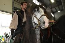 Z koňské výstavy v Lysé nad Labem.