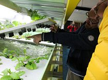 Akvaponie: V bunkru už žijí ryby a rostou saláty
