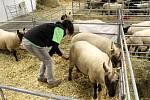 Výstaviště v Lysé patřilo zvířatům a kvalitním potravinám.