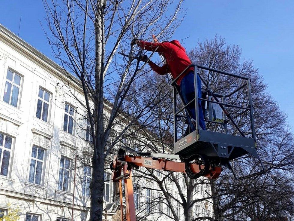 Úprava stromů v ulici nedaleko centra Poděbrad.