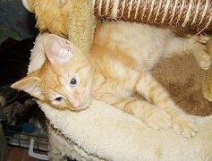 Kočky nežijí v klecích, ale většinu času tráví volně v kočkohernách.