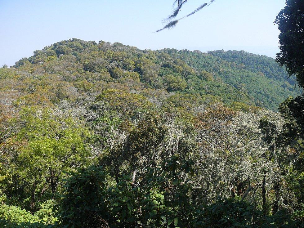 Vědci z Průhonic upozorňují na překvapující rychlost, s jakou mizejí tropické horské lesy v Africe.
