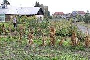 Ekologická zahrada u zemědělské školy v Poděbradech byla místem festivalu Díkuvzdání, kterým studenti a pedagogové oslavili letošní úrodu.