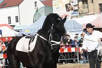 Výstaviště v Lysé nad Labem hostí do neděle 25. března dvojici výstav Zemědělec a Jaro s koňmi.