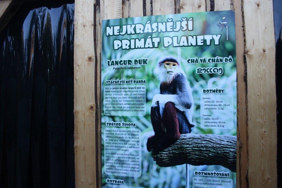 Do Zoo Chleby dorazili nejkrásnější primáti planety