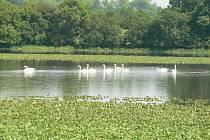 Voda v polích kolem Úmyslovic.