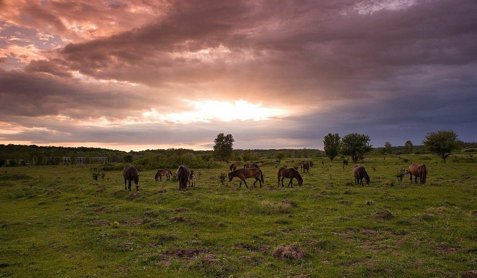 Dokončení rezervace v Milovicích pomůže nejenom se záchranou vzácných kopytníků, ale především zajistí přežití mnoha ohroženým druhů rostlin, motýlů a dalších drobných organismů.