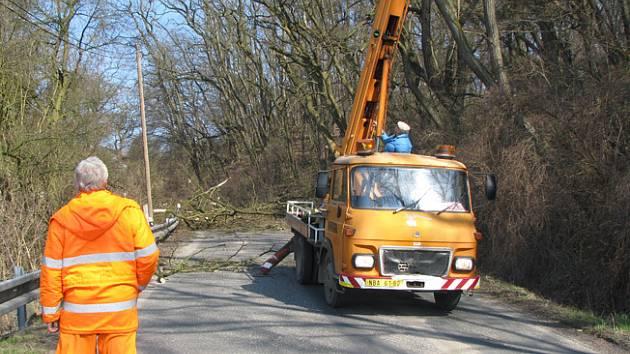 Za obcí Studce probíhá prořez akátů, které ohrožovoly řidiče