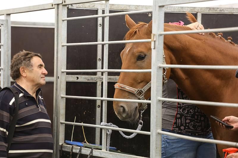 Z výstavy Kůň na výstavišti v Lysé nad Labem.