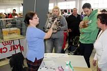 Poslední víkend před adventem se na výstavišti předvedly kočky.