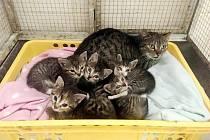 Kočka se svými koťaty v dočasném domově na Huslíku v Poděbradech.
