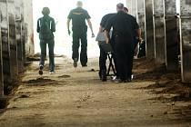 Býk způsobil zemědělci v kravíně v Sokolči