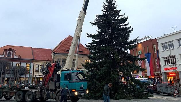 Vánoční strom byl smrk vysoký 15 metrů, vážil 2,6 tuny.