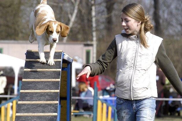 Základní kynologická organizace v Nymburce v sobotu pořádá Den psích sportů.