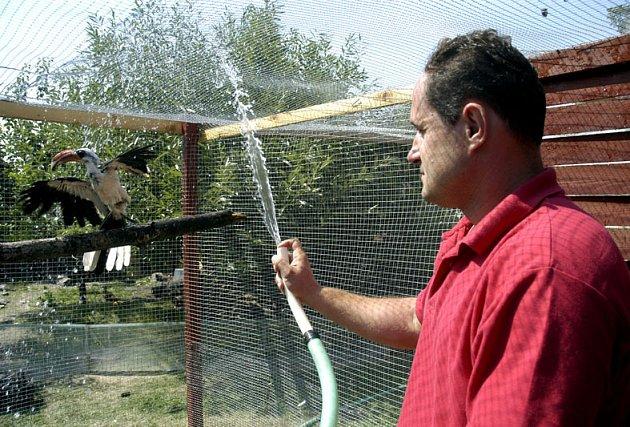 Osvěžují se i zvířata. Provozovatel minizoo v Pátku u Poděbrad Miroslav Dubina kropí zvířata třikrát denně. Na snímku se nechávájí chladivou vodou z hadice osvěžit  jeho opeřenci.