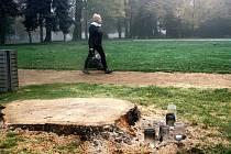 Mezi veřejností způsobilo značnou nelibost, že technické služby před několika týdny omylem pokácely zdravý sto padesát let starý dub, který byl zásadním architektonickým prvkem lázeňského parku.