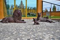 Pavilon lvů v Zoo Chleby.